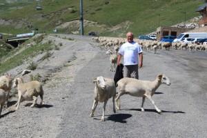 Avec un troupeau de moutons à la Mongie dans les Pyrénées